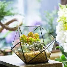 Low Bowl Planters by Compare Prices On Garden Vases Planters Online Shopping Buy Low