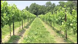 wire lifting in the vineyard 2010 youtube