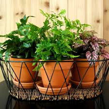 growing plants indoors with artificial light growing plants under artificial lights groundworks landscaping