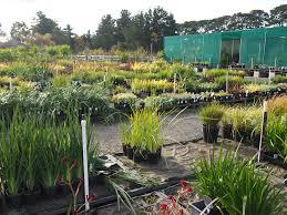 native plant nurseries melbourne diaco u0027s discount nursery melbourne