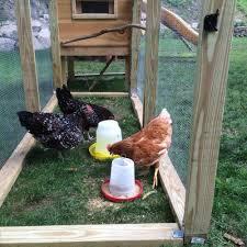 ct rent a hen