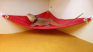 carolina designer dragons hammock for bearded dragons red crackle