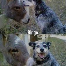 Funny Donkey Memes - you know what s sweeter than the sounds of a child s laughter the