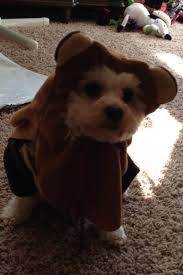 cute dog halloween costumes 85 cute halloween pet costumes to charm up your dazzling pets