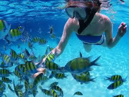 snorkeling images Pure snorkel tour dive barbados blue jpg