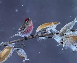 global great backyard bird count shatters records audubon