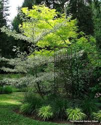 244 best garden delights trees images on notebooks