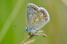 blue butterfly butterfly garden
