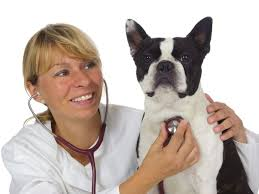 bauchspeicheldrüsenschwäche epi beim hund chronische bauchspeicheldrüsenschwäche