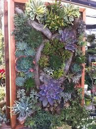 196 best vertical succulent gardens images on pinterest