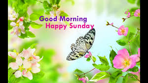 happy thanksgiving wishes funny happy sunday greetings 2017 quotes wishes saying wishes images
