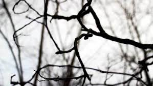 bare tree branches royalty free free hd