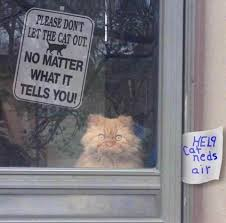 Cute Cat Memes - don t let the cat out no matter what he tells you cute cat