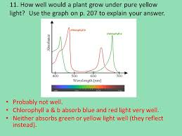 how well would a plant grow under pure yellow light photosynthesis notes essential questions 1 how do our cells