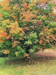 show michigan fall color photos mlive