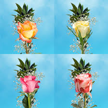 single roses with greenery recital fundraiser flowers