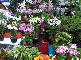 exterior design wonderful weston nurseries for beautiful garden