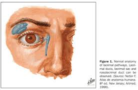 Surface Anatomy Eye Magnetic Resonance Dacryocystography Comparison Between