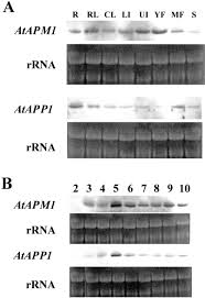 identification purification and molecular cloning of n 1