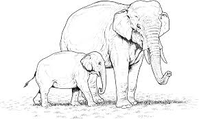perfect elephant coloring pictures best colori 9369 unknown