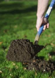 How To Get Rid Of Moles In The Backyard by How Can I Get Rid Of Moles In My Garden The English Garden