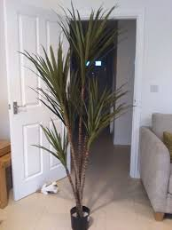 Dracaena Marginata Artificial 6ft 180cm Dracaena Marginata Palm Tree Faux