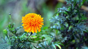 high res orange flower hd wallpapers 863869 wall