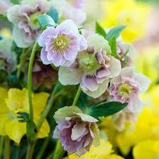 1030 best low maintenance landscape images on pinterest flower