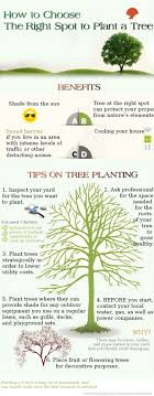 308 best trees vines images on plants gardening and fruit