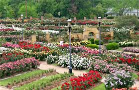 South Texas Botanical Gardens by Tyler Texas Rose Garden One Of The Largest Rose Gardens In