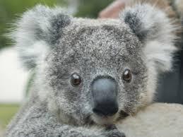 taronga zoo animals taronga conservation society australia