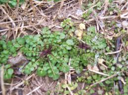 Identify Flowers - identify this wild plant u2013 gettin u0027 fresh