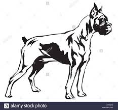 boxer dog black and white decorative dog boxer vector illustration in black and white stock