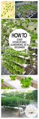 how to start hydroponic gardening as a beginner how to garden