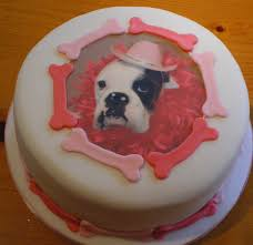 boxer dog birthday cake picturespng cakes cupcakes u0026 pop