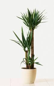 10 most popular indoor trees