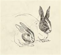 beatrix potter rabbit beatrix potter artnet