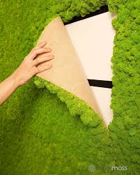 How To Make A Moss Wall by Natural Dried Reindeer Moss By Polarmoss Comes In Various Forms To