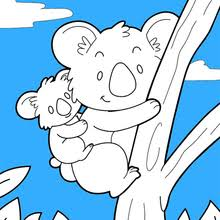 koala coloring pages drawing kids videos kids reading