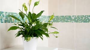 indoor plants look great they u0027re also great for your health