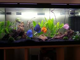 Live Plants In Community Aquariums by How To
