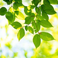 tree facts at arborday org