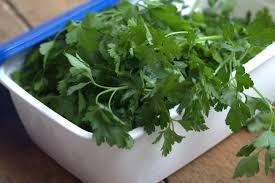 les herbes de cuisine comment conserver les herbes aromatiques persil coriandre