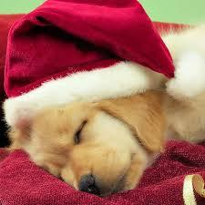 cute dog christmas wallpapers tierische weihnacht wallpaper of a cute christmas dog at