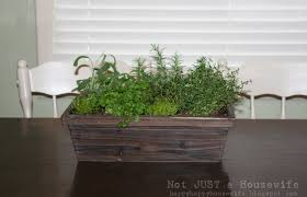 Growing Herbs Inside Growing Herbs Indoors Stacy Risenmay