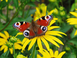 images flowers and butterflies wallpaper and