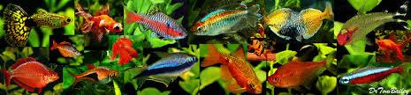 aquarium fish tropical fish and goldfish for sale