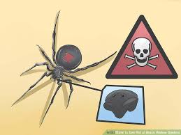 Are Spiders Attracted To Light How To Get Rid Of Black Widow Spiders With Pictures Wikihow
