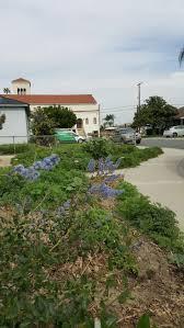 native plant nursery santa cruz 44 best plants for garden images on pinterest plants for garden