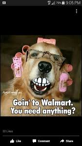 Funny Its Friday Memes - going to walmart funny dog meme http jokideo com going to